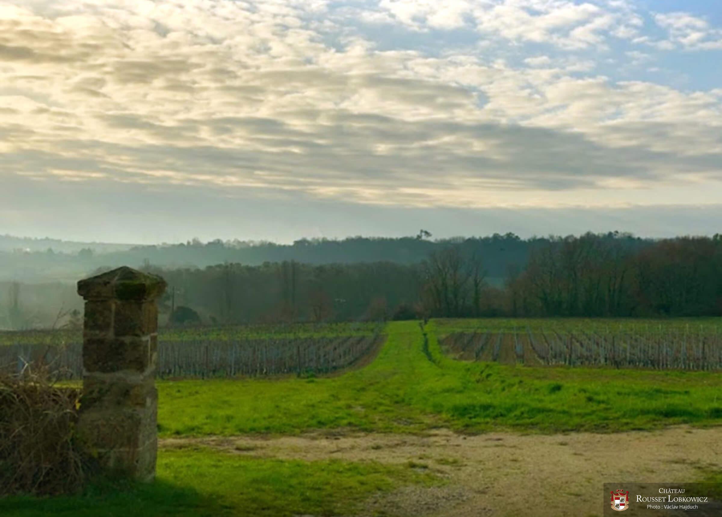 Le vignoble - Château Rousset Lobkowicz